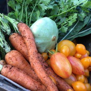 Alle grøntsagsfrø