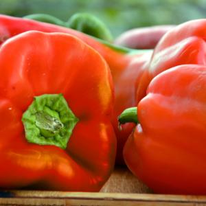 rød peberfrugt frø