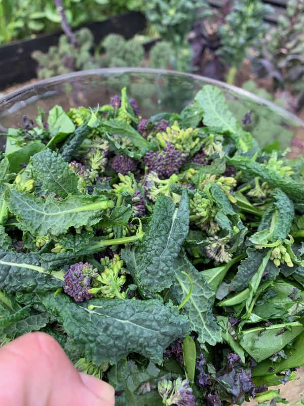 lilla broccoli i salat